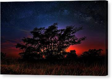 The Tree Of Life Canvas Print by Mark Andrew Thomas