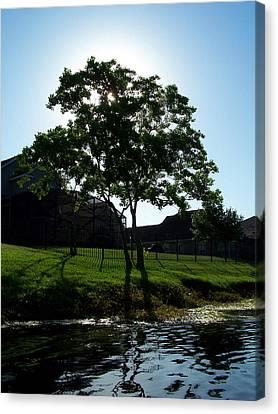 The Tree Of Toho Canvas Print