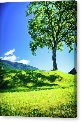 The Tree On The Hill Canvas Print