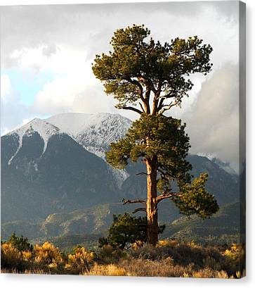 Great Sand Dunes National Park Canvas Print - The Tree by Ryan Scholl