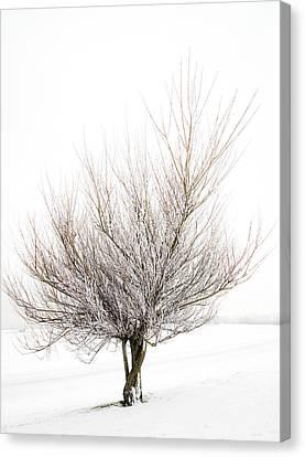 The Tree Canvas Print by Svetlana Sewell