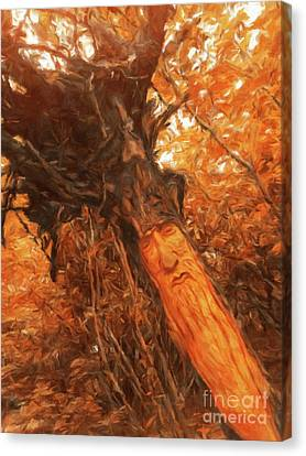 The Tree Wizard By Sarah Kirk Canvas Print