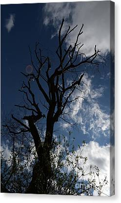 The Treeness Of A Tree Canvas Print
