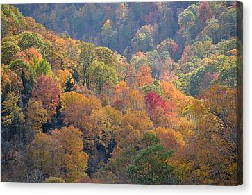 The Trees Of Autumn On The Blue Ridge Canvas Print