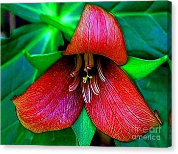 Canvas Print featuring the photograph The Trillium by Elfriede Fulda