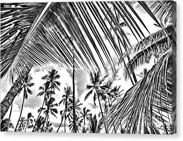 Canvas Print featuring the photograph The Tropics by DJ Florek
