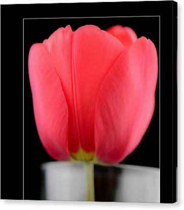 The Tulip   In Frame Canvas Print by Tommytechno Sweden