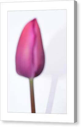 The Tulip In The Abstract Way  Canvas Print by Tommytechno Sweden
