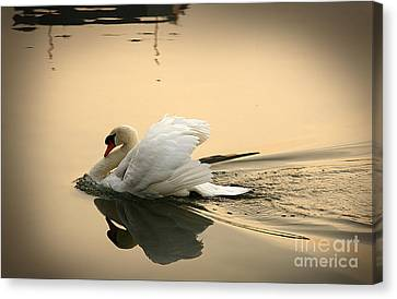 The Ugly Duckling Canvas Print by Eena Bo