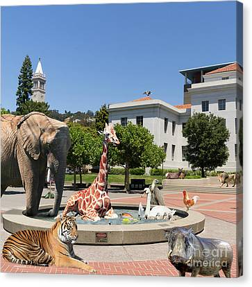 The University Of California Berkeley Welcomes You To The Zoo Please Do Not Feed The Animals Square Canvas Print by Wingsdomain Art and Photography