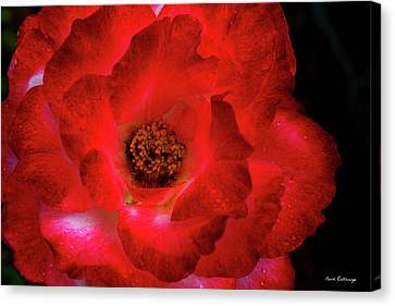 Flowerrs Canvas Print - The Very Red Rose Flower Garden Art by Reid Callaway