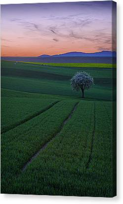 The Viewer Canvas Print