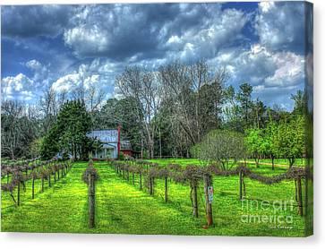 The Vineyard House Landscape Photography Art Canvas Print