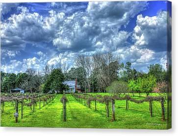 The Vineyard Vines Landscape Photography Art Canvas Print