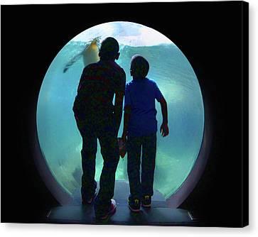 The Visit - Penguins - Aquarium Canvas Print by Nikolyn McDonald