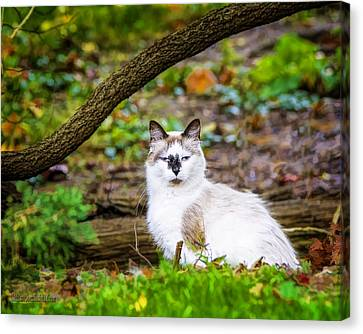 The Watch Cat Canvas Print