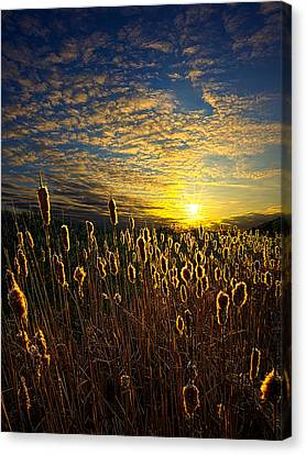 The Watchers Canvas Print by Phil Koch