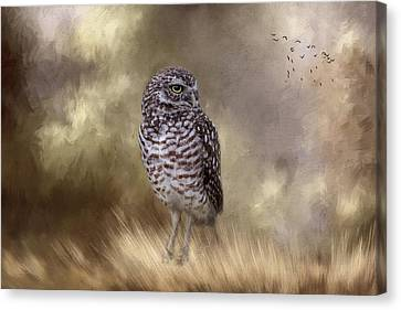 Canvas Print - The Watchful Eye by Kim Hojnacki