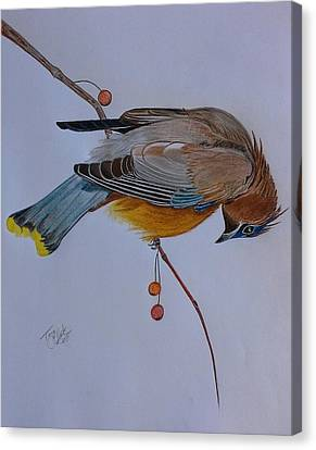 The Waxwing  Canvas Print by Tony Clark