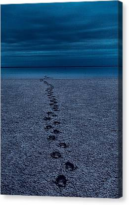 The Way Back Canvas Print by Julian Cook