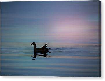 The Way Home Canvas Print by Christopher L Thomley