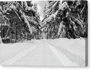 The Way Into The Winter - Monochrome Version Canvas Print by Andreas Levi