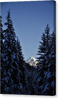 Snow Covered Trees Canvas Print - The Wedge Through The Trees by Pelo Blanco Photo