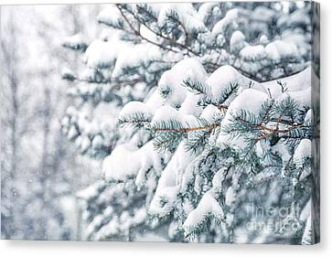 The Weight Of Winter Canvas Print by Evelina Kremsdorf