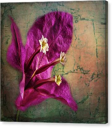 Canvas Print featuring the photograph The Well Dressed Bougainvillea by Bellesouth Studio