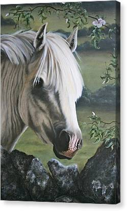 Stone Pony Canvas Print - The Welshman by Beth Munnings