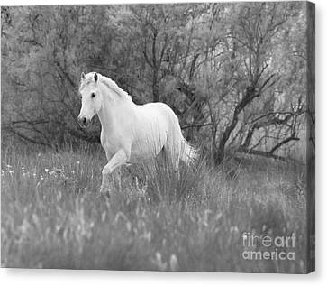 The White Horse In The Forest Canvas Print
