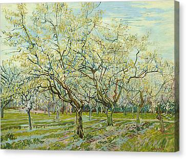 The White Orchard  Canvas Print by Vincent van Gogh