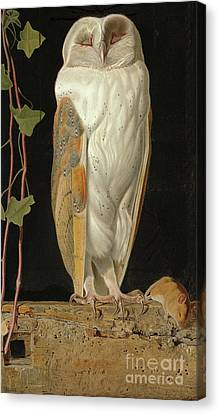 The White Owl Canvas Print by William J Webbe