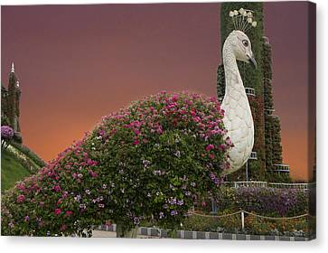 The White Peacock Canvas Print by Art Spectrum