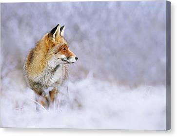 The White, Red And Blue- Red Fox In The Snow Canvas Print