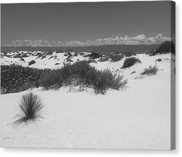 The White Sands, Nm Canvas Print by Lori Thompson