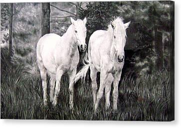 The White Stallions Canvas Print