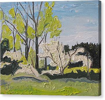 The White Tree Sawyerville Quebec Canada Canvas Print by Francois Fournier