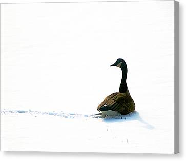 Canvas Print - The Wild Goose Once More by Guy Ricketts