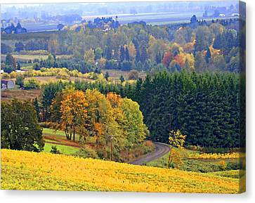 Vine Grapes Canvas Print - The Willamette Valley by Margaret Hood