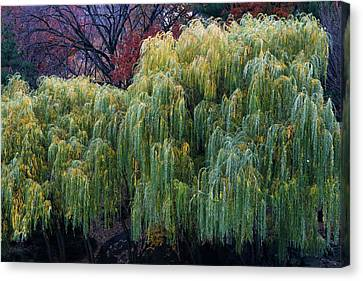 The Willows Of Central Park Canvas Print