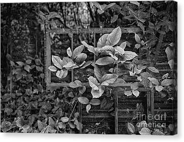 Old Windows Canvas Print - The Window Without A View by Masako Metz