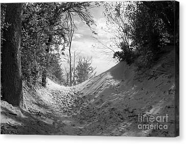 The Windy Path Canvas Print by Cathy  Beharriell