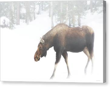 The Winter Moose Canvas Print by Brian Gustafson