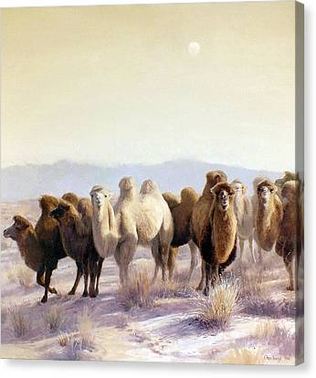 Camel Canvas Print - The Winter Solstice by Chen Baoyi