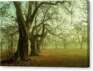 The Winter Trees Canvas Print by Mark Rogan