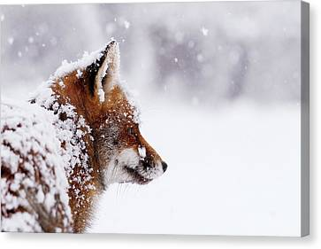 The Winterwatcher - Red Fox In The Snow Canvas Print by Roeselien Raimond