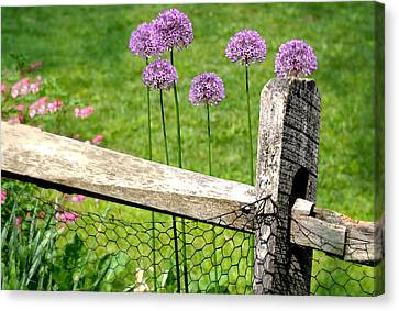 The Wired Fence Canvas Print