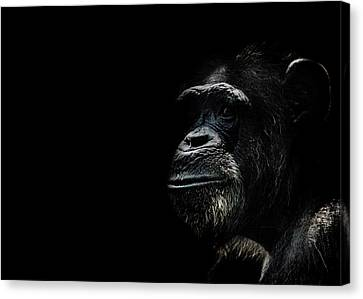 Ape Canvas Print - The Wise by Martin Newman