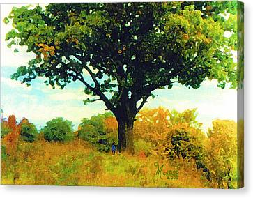 The Witness Tree Canvas Print